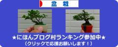 にほんブログ村 花・園芸ブログ 盆栽へ