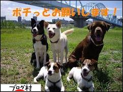 にほんブログ村 犬ブログ 犬 訓練士・ドッグトレーナーへ