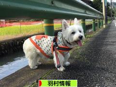にほんブログ村 地域生活(街) 東京ブログ 羽村情報へ