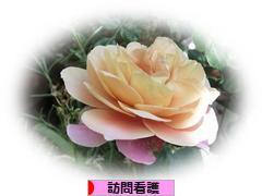 にほんブログ村 病気ブログ 訪問看護へ