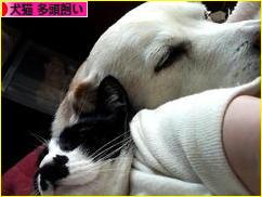 にほんブログ村 犬ブログ 犬猫 多頭飼いへ