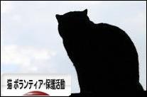 にほんブログ村 猫ブログ 猫 ボランティア・保護活動へ