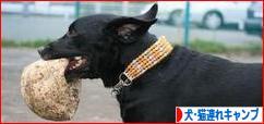 にほんブログ村 アウトドアブログ 犬連れ・猫連れキャンプへ