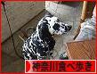 にほんブログ村 グルメブログ 神奈川・横浜食べ歩きへ