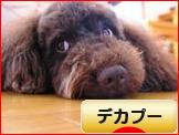 にほんブログ村 犬ブログ デカプーへ
