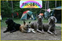 にほんブログ村 犬ブログ 犬のいる暮らしへ