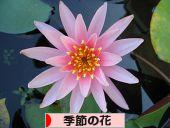にほんブログ村 花ブログ 季節の花