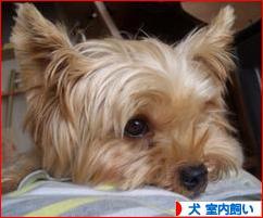 にほんブログ村 犬ブログ 犬 室内飼いへ