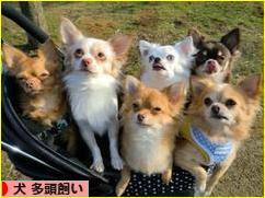 にほんブログ村 犬ブログ 犬 多頭飼い<a href=