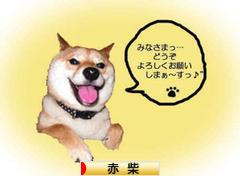 にほんブログ村 犬ブ<br />ログ 赤柴犬へ