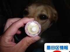 にほんブログ村 地域生活(街) 東京ブログ 墨田区情報へ