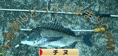にほんブログ村 釣りブログ チヌ・黒鯛釣りへ
