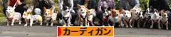 にほんブログ村 犬ブログ ウェルシュ・コーギー・カーディガンへ