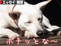 にほんブログ村 小説ブログ エッセイ・随筆へ