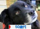 にほんブログ村 シニア日記ブログ 50歳代へ