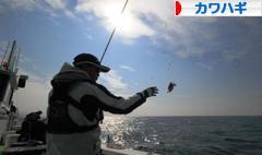 にほんブログ村 釣りブログ カワハギ釣りへ