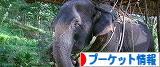 にほんブログ村 海外生活ブログ プーケット情報へ