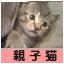 にほんブログ村 猫ブログ 親子猫へ