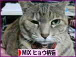 にほんブログ村 猫ブログ MIXヒョウ柄猫へ