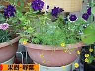 にほんブログ村 花ブログ 果樹・野菜(家庭菜園)へ