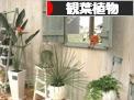 にほんブログ村 花ブログ 観葉植物へ