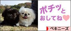 にほんブログ村 犬ブログ ペキニーズへ