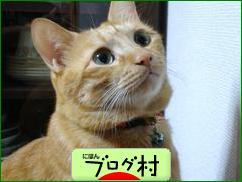 にほんブログ村 猫ブログ 猫情報へ