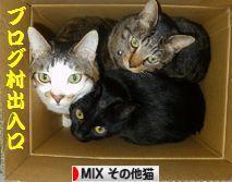 にほんブログ村 猫ブログ MIXその他猫へ