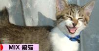 にほんブログ村 猫ブログ MIX縞猫へ