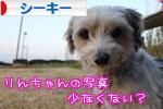 にほんブログ村 犬ブログ シーキーへ