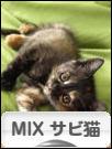 にほんブログ村 猫ブログ MIXサビ猫へ