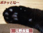 にほんブログ村 猫ブログ 元野良猫・元保護猫へ
