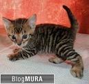 にほんブログ村 猫ブログ トイガーへ