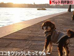 にほんブログ村 旅行ブログ ペット同伴旅行へ