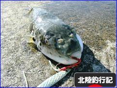 にほんブログ村 釣りブログ 北陸釣行記へ