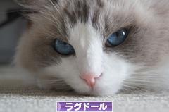 癒しのユキちゃん☆彡