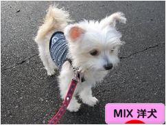 にほんブログ村 犬ブログ MIX 洋犬へ