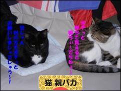 http://cat.blogmura.com/cat_oyabaka/img/originalimg/0000166022.jpg