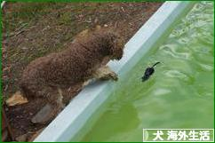 にほんブログ村 犬ブログ 犬 海外生活へ