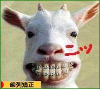 にほんブログ村 美容ブログ 歯列矯正へ