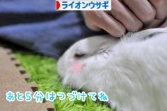 にほんブログ村 うさぎブログ ライオンウサギへ