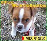にほんブログ村 犬ブログ MIX小型犬へ