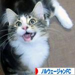 にほんブロ<br />グ村 猫ブログ ノルウェージャンフォレストキャットへ