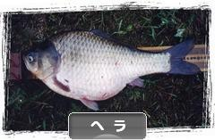 にほんブログ村 釣りブログ ヘラブナ釣りへ