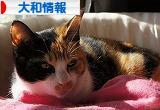 にほんブログ村 地域生活(街) 関東ブログ 大和情報へ
