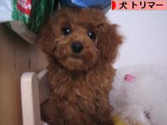 にほんブログ村 犬ブログ 犬 トリマーへ