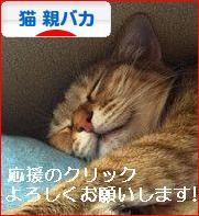 にほんブログ村 猫ブログ 猫 親バカへ