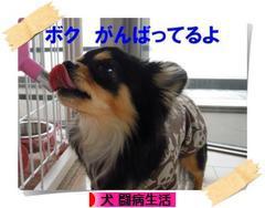 にほんブログ村 犬ブログ 犬 闘病生活へ