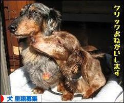 元保護犬【アーチ&モビ】