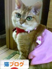 猫ブログブログランキング参加用リンク一覧